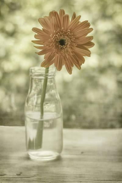 Photograph - Happiness by Kim Hojnacki