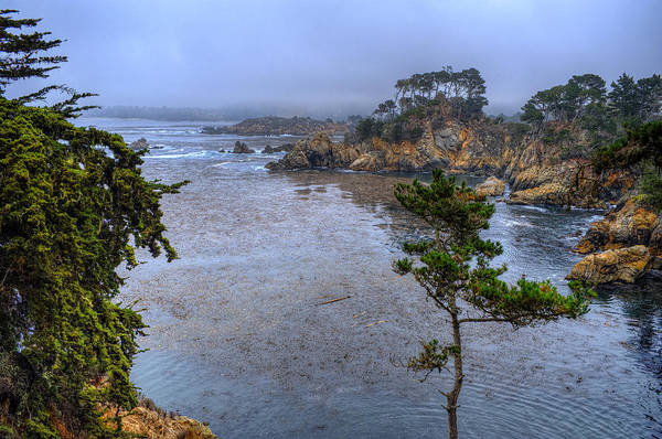 Carmel By The Sea Photograph - Harbor Seal Cove by Stephen Campbell