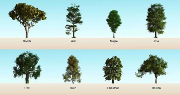 Rowan Photograph - Hardwood Trees by Mikkel Juul Jensen