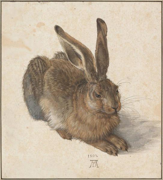 Northern Renaissance Wall Art - Painting - Hare by Albrecht Durer