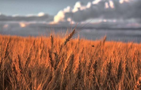 Photograph - Harvest Time by David Matthews