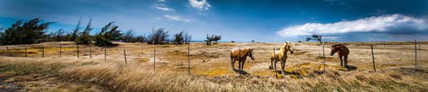 Steed Photograph - Hawaiian Horses by Hastings Franks