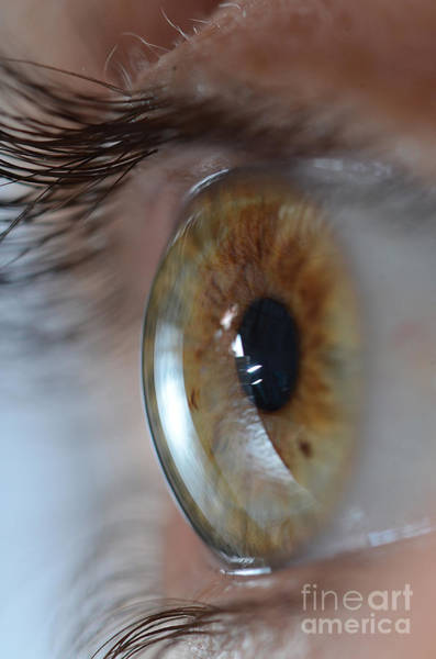 Photograph - Hazel Eye by Photo Researchers Inc