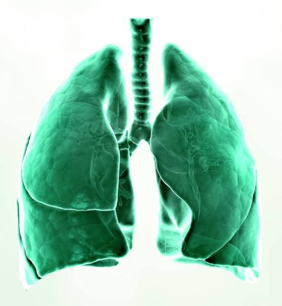 Organ Digital Art - Healthy Lungs, Artwork by Andrzej Wojcicki
