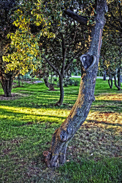 Wall Art - Photograph - Heart Of The Tree by Madeline Ellis