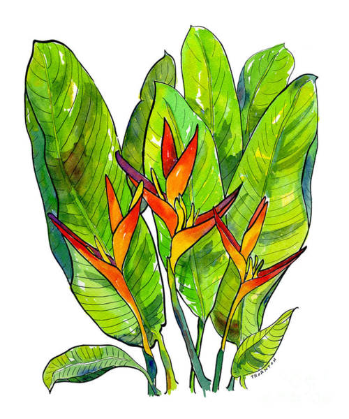 Painting - Heliconia by Diane Thornton