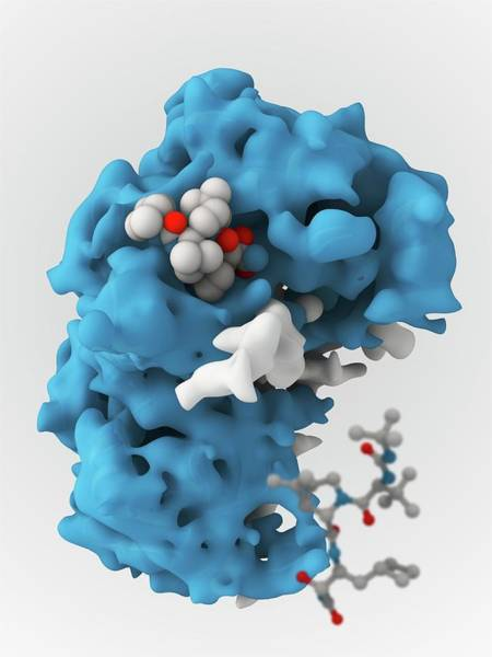 Ns Photograph - Hepatitis C Viral Protease Molecule by Ramon Andrade 3dciencia/science Photo Library