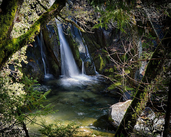Photograph - Hidden Falls by Anthony Bonafede