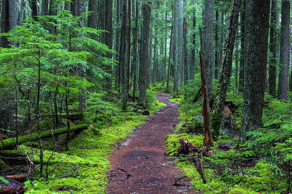 Glacier National Park Photograph - Hiking Trail Winds Through Mossy by Chuck Haney