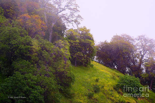 Photograph - Hillside Landscape by Richard J Thompson