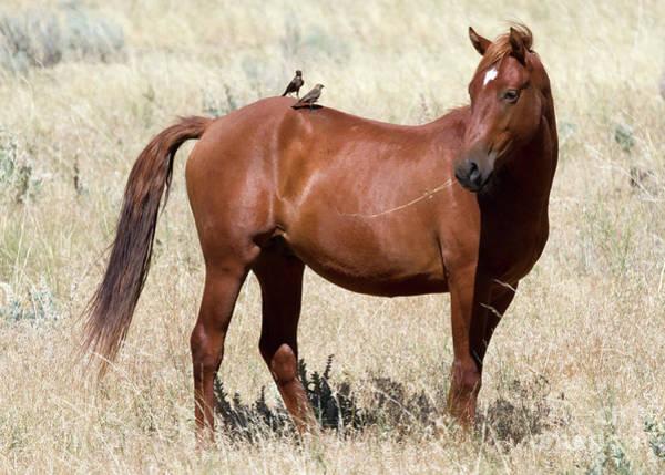 Australian Wildlife Wall Art - Photograph - Hitching A Ride by Mike  Dawson