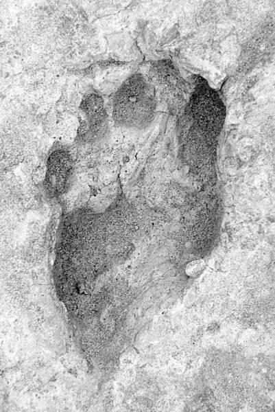 Wall Art - Photograph - Homo Erectus Footprint by Prof. Matthew Bennett, Bournemouth University/science Photo Library
