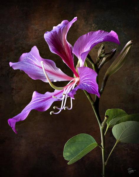 Hong Kong Orchid Photograph - Hong Kong Orchid by Endre Balogh