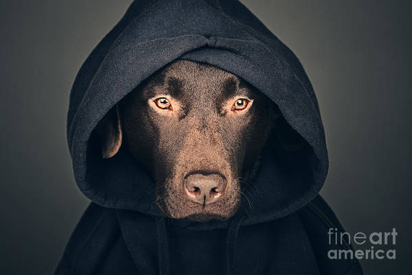 Hoodie Photograph - Hooded Dog by Justin Paget