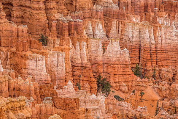 Photograph - Hoodoos In Bryce Canyon by Pierre Leclerc Photography