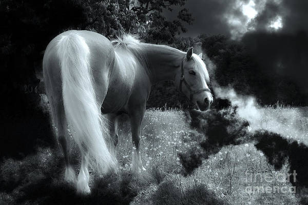 Phantasy Wall Art - Photograph - Horse by Christine Sponchia
