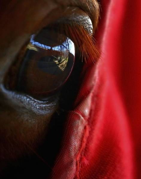 Photograph - Horse Eye 24560 by Jerry Sodorff