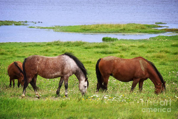 Photograph - Horses by Angela Doelling AD DESIGN Photo and PhotoArt