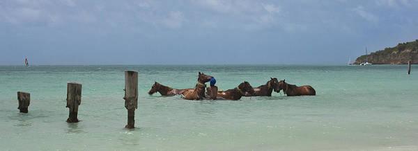 Shirleys Bay Photograph - Horses At Sea by Pier Giorgio Mariani