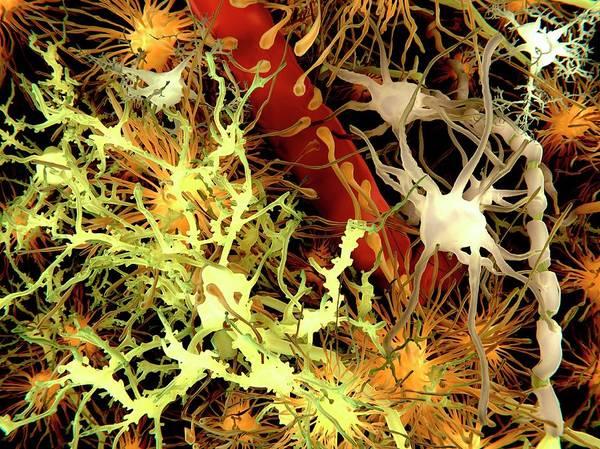Wall Art - Photograph - Human Brain Cells, Artwork by Juan Gaertner