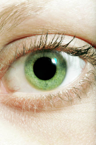 Green Jay Photograph - Human Eye by Coneyl Jay/science Photo Library