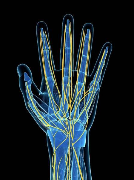 Human Hand Nerves Art Print by Sebastian Kaulitzki
