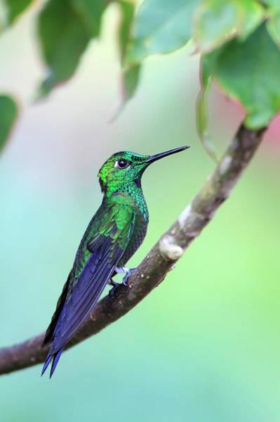 Wall Art - Photograph - Hummingbird by Mlorenzphotography