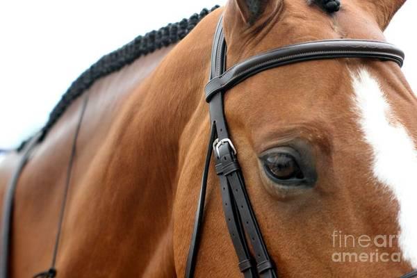 Photograph - Hunter Eye by Janice Byer