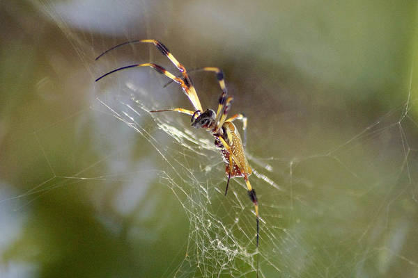 Wall Art - Photograph - Hurricane Spider by Richard Hawke