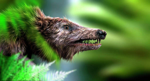 Wall Art - Photograph - Hyaenodon by Christian Darkin