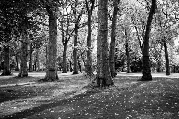 Photograph - Hyde Park by Ross Henton