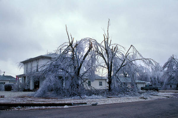 Wall Art - Photograph - Ice Storm Damage by Jim Reed/science Photo Library