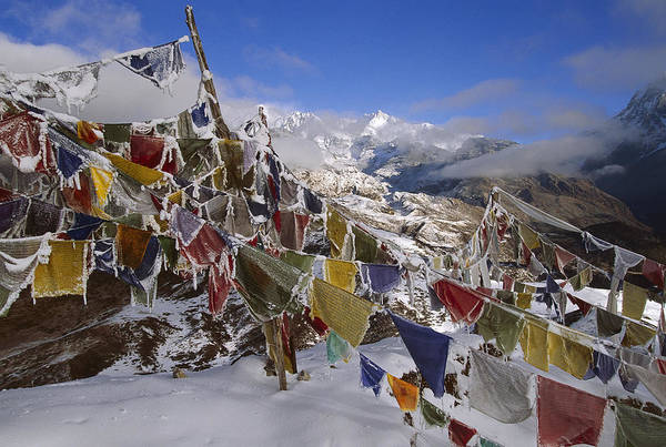 Photograph - Icy Prayer Flags Himalaya by Colin Monteath