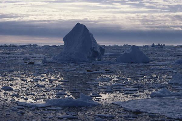 Wall Art - Photograph - Icy Seas, Antarctica by Robert Hernandez