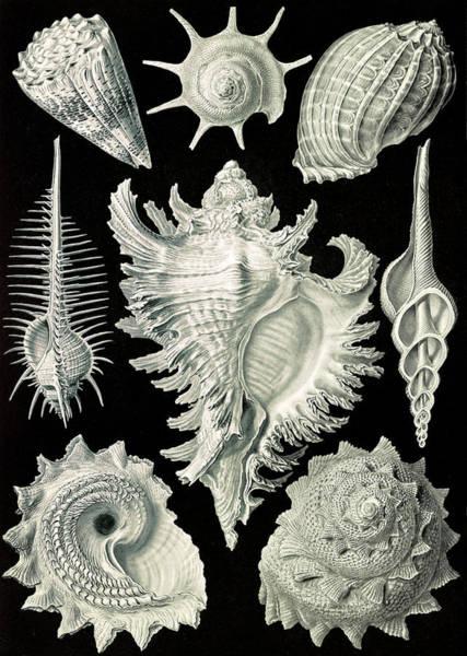 Wall Art - Drawing - Illustration Shows Aquatic And Terrestrial Snails by Artokoloro
