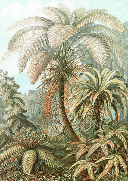 Wall Art - Drawing - Illustration Shows Ferns. Filicinae. - Laubfarne by Artokoloro