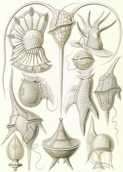 Illustration Shows Microorganisms. Peridinea Art Print by Artokoloro