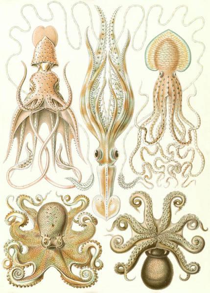 Wall Art - Drawing - Illustration Shows Octopuses. Gamochonia by Artokoloro