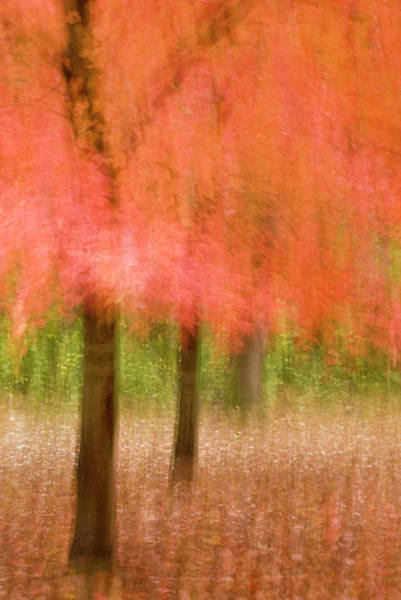 Green Jay Photograph - Impressionistic View Of Trees In Autumn by Jaynes Gallery