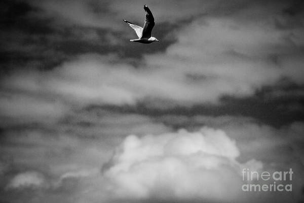 Wall Art - Photograph - In Flight by William Norton