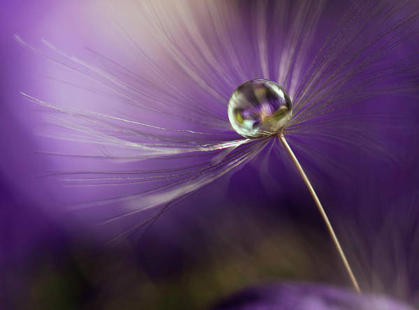 Tender Photograph - In Shades Of Purple by Heidi Westum
