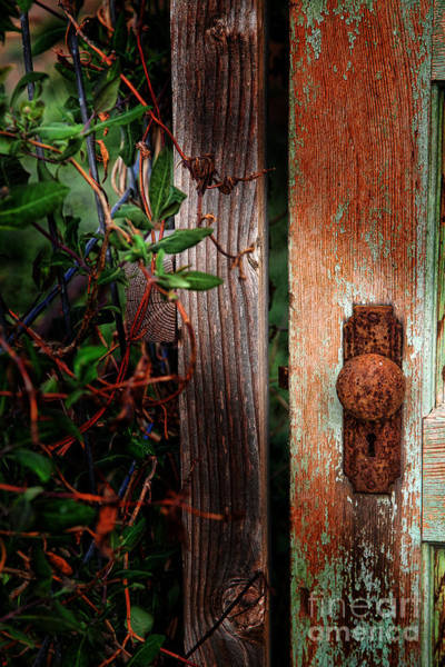 Photograph - The Garden Door by Jim Garrison