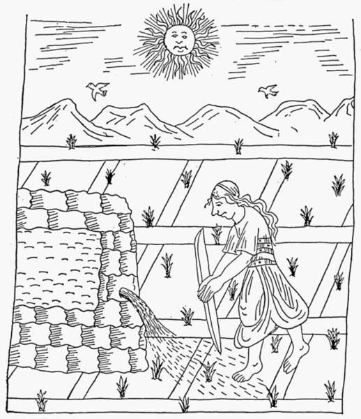 Indian Corn Drawing - Incan Farmer, C1583 by Granger