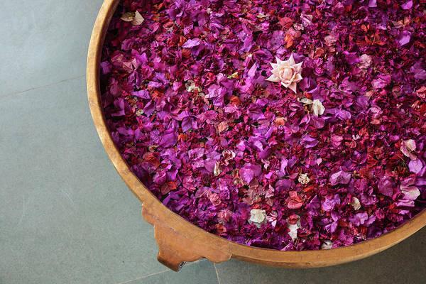 Rose Bowl Photograph - India, Rajasthan, Bikaner by Alida Latham