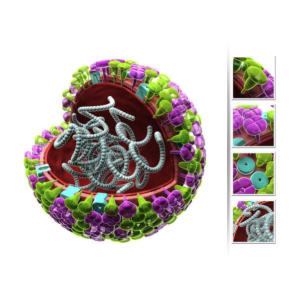 Neuraminidase Photograph - Influenza Virus Structure by Harvinder Singh