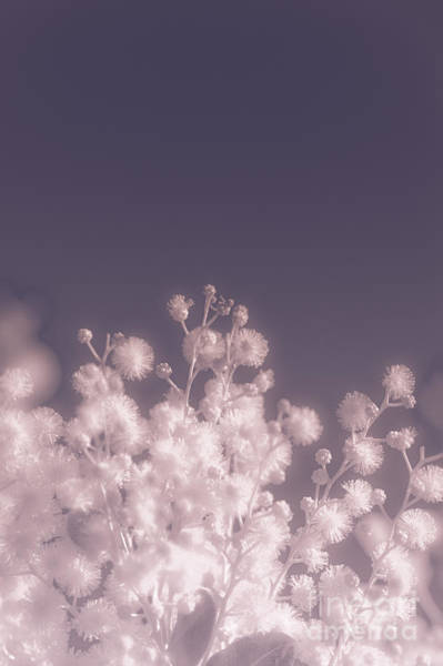 Infrared Radiation Photograph - Infrared Nature Bloom by Jorgo Photography - Wall Art Gallery