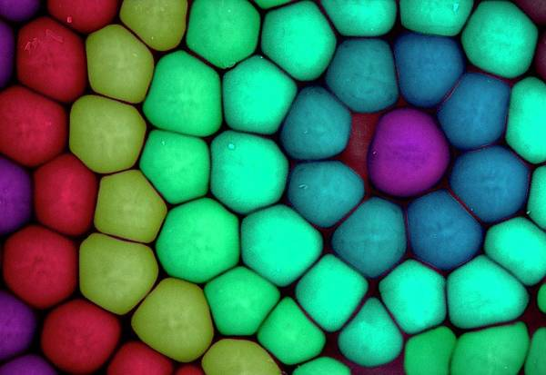 Compound Eyes Photograph - Insect Compound Eye by Louise Hughes