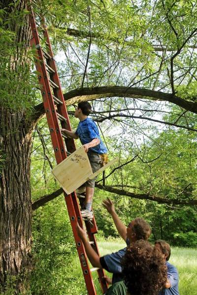 Non Profit Photograph - Installing A Nesting Box by Jim West