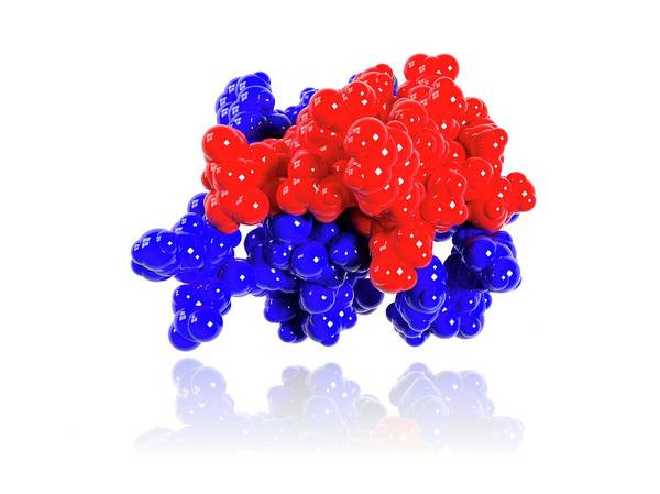 Insulin Molecule Art Print