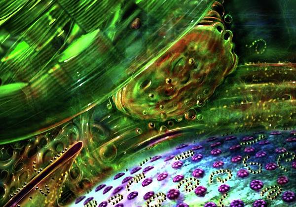 Organelle Photograph - Internal Cellular Structure by Russell Kightley/science Photo Library